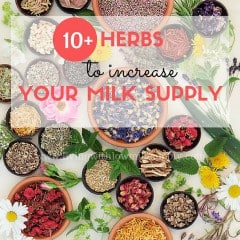 herbs to increase milk supply