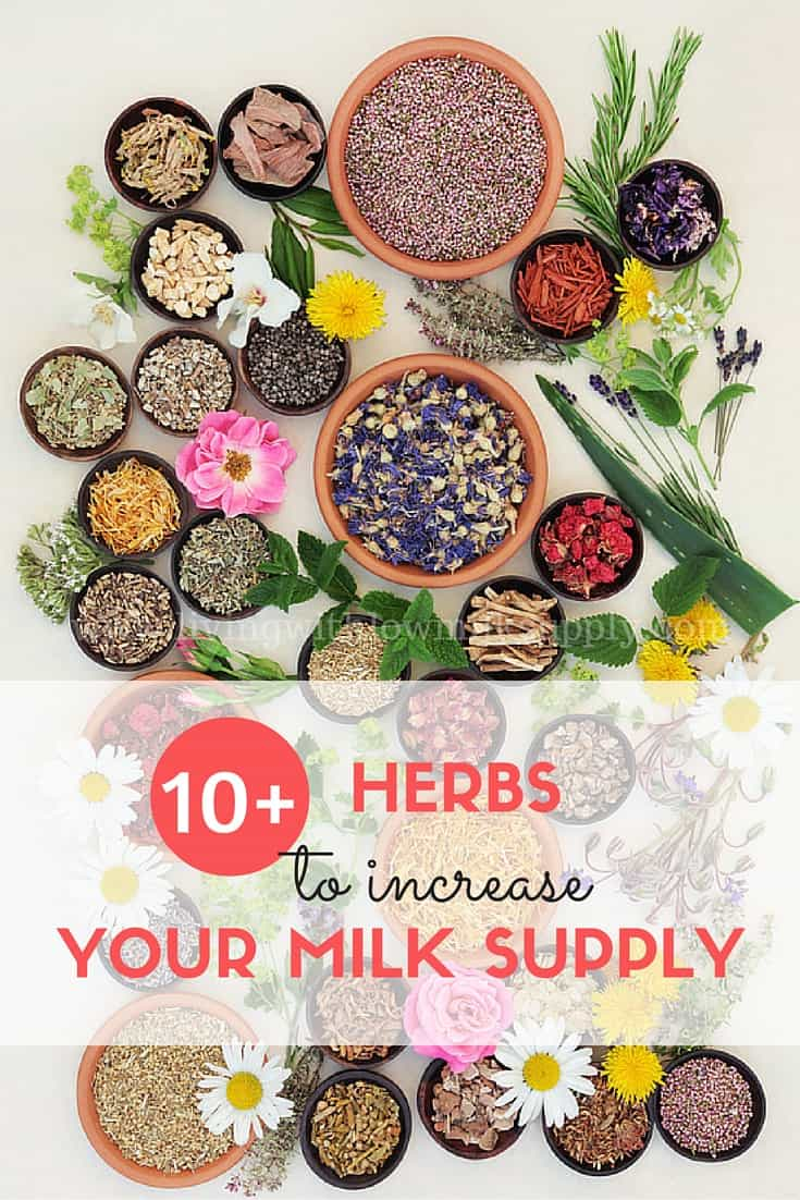 herbs to increase your milk supply